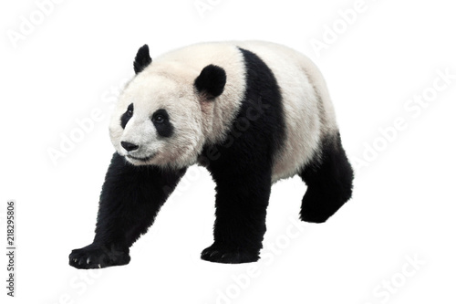 Deurstickers Panda Panda isolated on white background