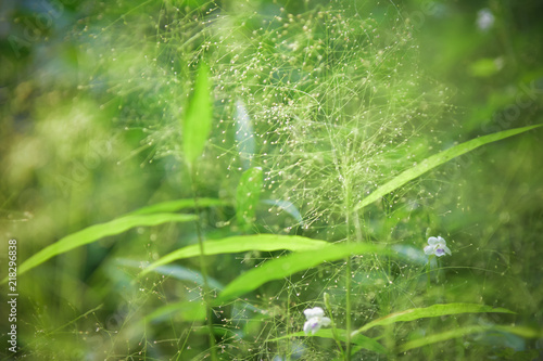 Poster Natuur Beautiful Green Flowers in nature background. select focus