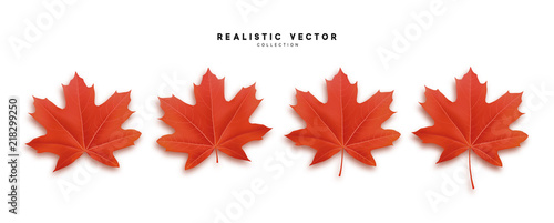 Foto  Set of autumn maple leaves, isolated on white background