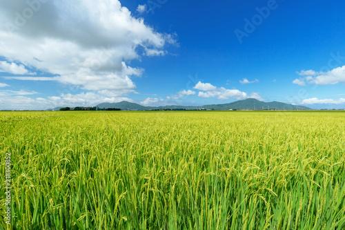 Foto  【新潟県新潟市】越後平野の水田