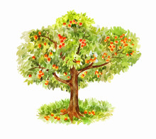 Watercolor Vector Apple Tree Isolated On White