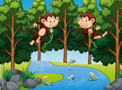 Staande foto Kids Monkey hanging on vine in forest