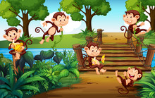 A Group Of Monkey  At The Park