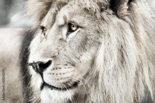 Staande foto Leeuw Lion. Portait lion in white lights