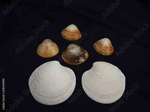 ラグ-ナビ-チの貝