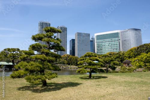 Obrazy powiększające wnętrze   bonsai-shaped-trees-in-a-park-in-tokyo