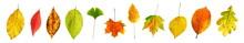 Serie Freigestellter Bunt Gemischter Herbstblätter