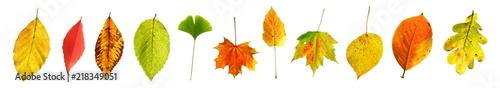 Fotografía  Serie freigestellter bunt gemischter Herbstblätter