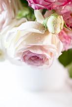 Wet Rose, Close-up