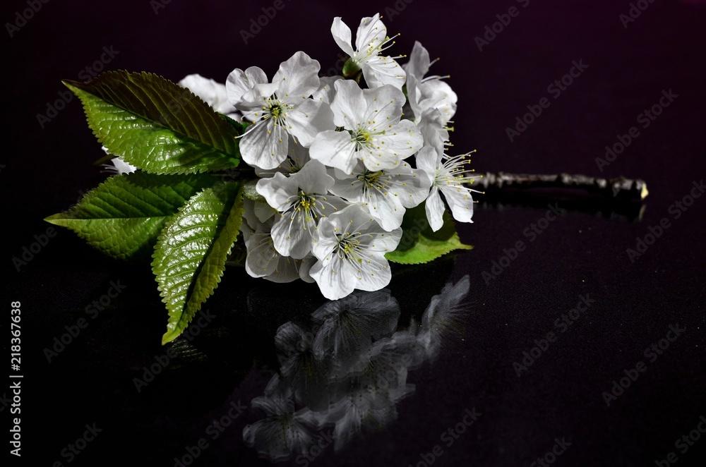 Fototapeta kwiat jabłoni - obraz na płótnie