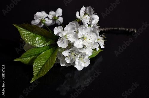 Fototapeta kwiat jabłoni obraz na płótnie