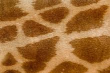 Giraffe Skin Pattern. Giraffe ...