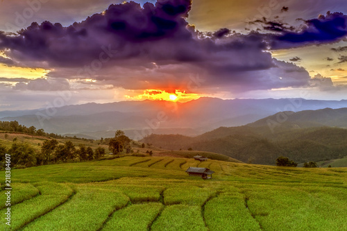 Tuinposter Rijstvelden Rice farmers transplant in the paddy field on rice field terraced in north Thailand, Mae jam, Chiang Mai, Thailand.