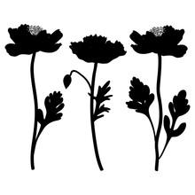 Poppy Flowers Vector Hand Draw...