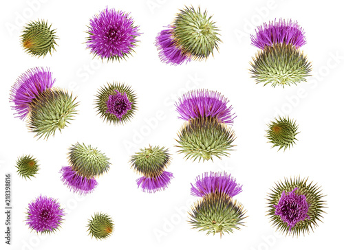 Set of different flowers milk thistle buds isolated on white background Fototapeta