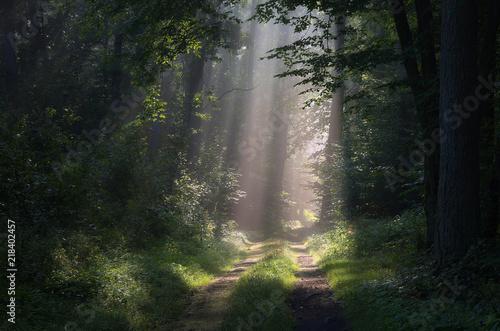 Obraz Leśne promienie - fototapety do salonu