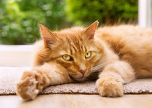 Close-up Of A Relaxed Cat Lying On A Mat Next To A Patio Door