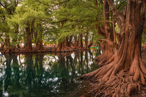 Beautiful reflection of trees at the Camecuaro Lake National Park in Michoacan, Mexico