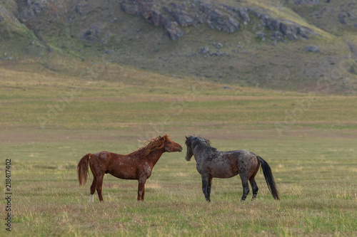 Photo  Beautiful Wild Horses in Utah in Summer
