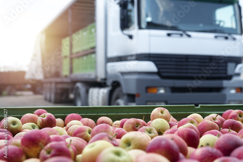 Fototapeta Fruit and food distribution. Truck loaded with containers full of apples ready to be shipped to the market. obraz