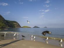Wildlife, Vultures, Seagulls A...