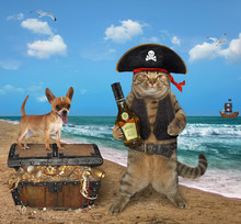 The Cat Pirate With His Dog Is Next To A Chest Full Of Treasures On The Seashore.