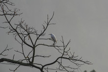 A Bird Settled On The Bare Trees