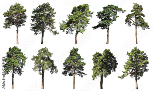 Canvas-taulu Coniferous forest