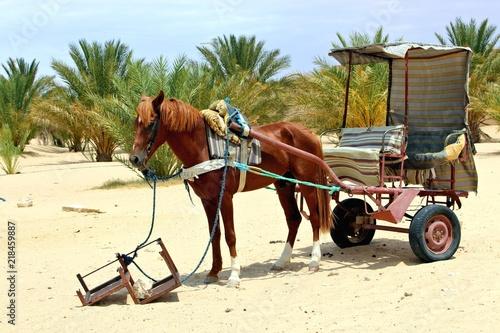 Fotografia, Obraz  pferdekutsche mitten in der wüste sahara