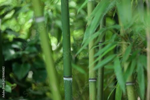zielone-bambusowe-pnie