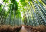 Fototapeta Na drzwi - Walkway in bamboo forest shady with sunlight at Arashiyama