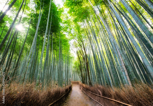 Spoed Fotobehang Bestsellers Walkway in bamboo forest shady with sunlight at Arashiyama