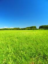 夏の水元公園の草原と...