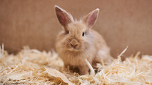 Cute Beautiful Rabbit In The Petting Zoo.