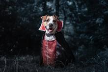 Cute Dog Dressed Up As Vampire...