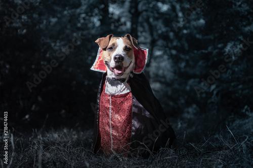 Cute dog dressed up as vampire in dark moonlit forest Fototapeta