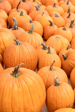 Halloweenkürbisse Als Hintergrund, Halloween Und Kürbis