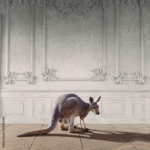 Obraz kangaroo in the room - fototapety do salonu