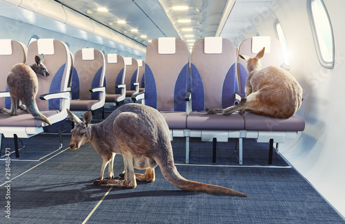 Photo sur Toile Kangaroo kangaroo in the airplane cabin interior.