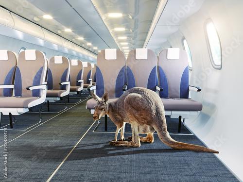 Fotobehang Kangoeroe kangaroo in the airplane cabin interior.