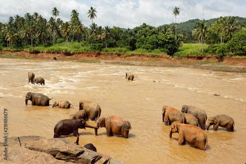 Plakat Stado słoni w rzece