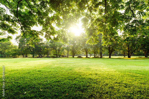 Garden Poster Pistachio Beautiful landscape in park with tree and green grass field at morning.