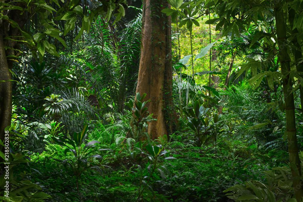 Fototapety, obrazy: Tropical rainforest