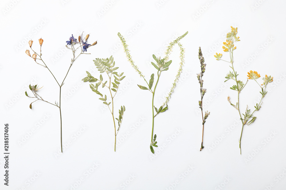 Fototapety, obrazy: Wild dried meadow flowers on white background, top view