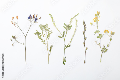 Cuadros en Lienzo Wild dried meadow flowers on white background, top view