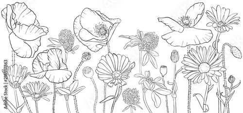 vector drawing poppy flowers - 218517863