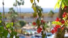 Tropical Resort In 4k Slow Mot...