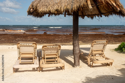 Fotografija  Tourists are staying away from a beach invaded with Sargassum seaweed in Mexico