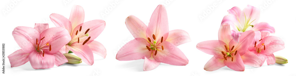 Fototapety, obrazy: Set with beautiful lilies on white background
