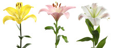 Set With Beautiful Lilies On W...